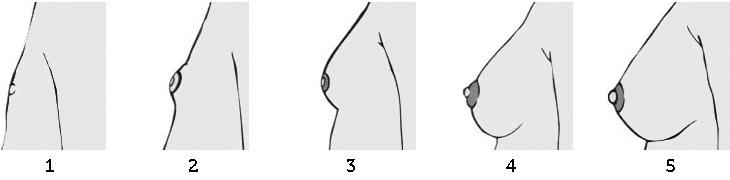 Stages of Breast Development