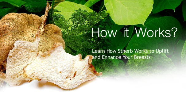 Pueraria Mirifica how it work
