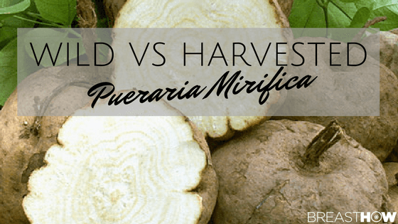 Wild vs Harvested Pueraria Mirifica