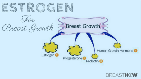 How To Balance Estrogen For Breast Growth