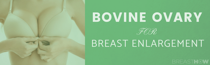 Bovine Ovary for Breast Enlargement